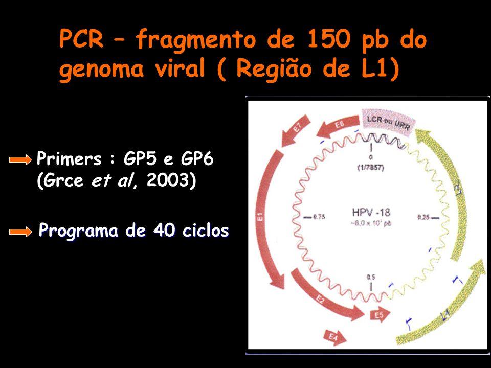 PCR – fragmento de 150 pb do genoma viral ( Região de L1) Primers : GP5 e GP6 (Grce et al, 2003) Programa de 40 ciclos