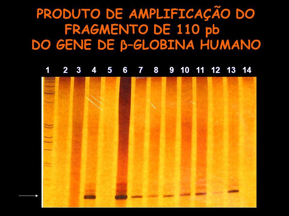 PRODUTO DE AMPLIFICAÇÃO DO FRAGMENTO DE 110 pb DO GENE DE β–GLOBINA HUMANO 1 2 3 4 5 6 7 8 9 10 11 12 13 14 1 2 3 4 5 6 7 8 9 10 11 12 13 14
