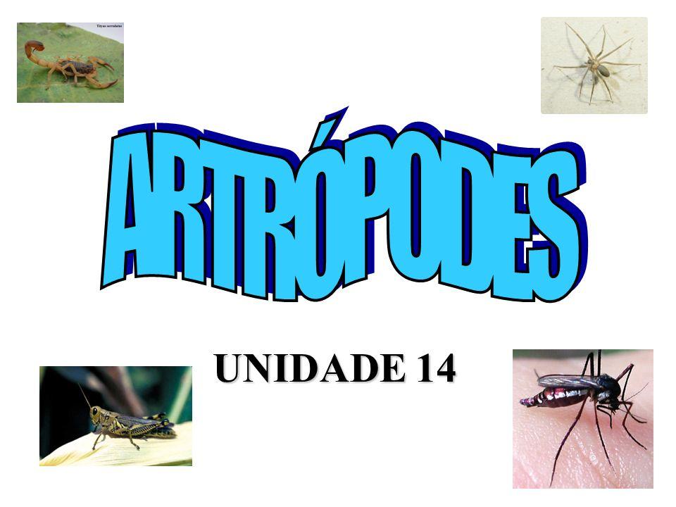 UNIDADE 14