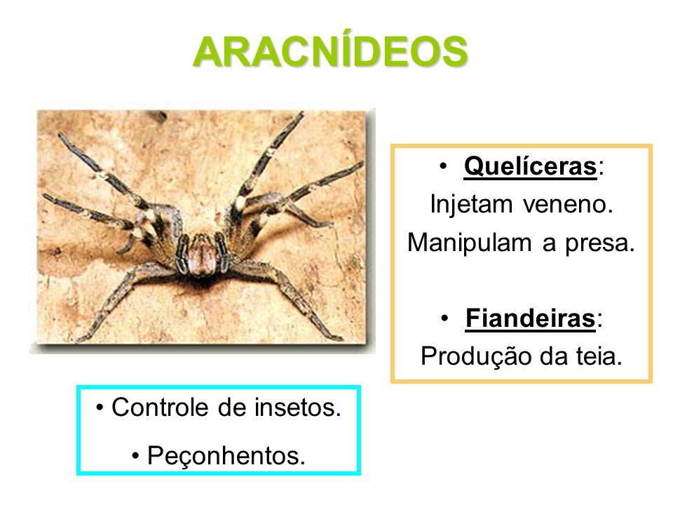 Quelíceras: Injetam veneno. Manipulam a presa. Fiandeiras: Produção da teia. ARACNÍDEOS Controle de insetos. Peçonhentos.