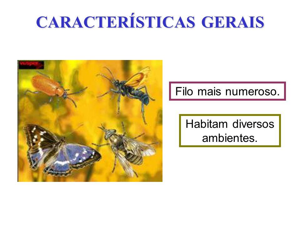 CARACTERÍSTICAS GERAIS Filo mais numeroso. Habitam diversos ambientes.