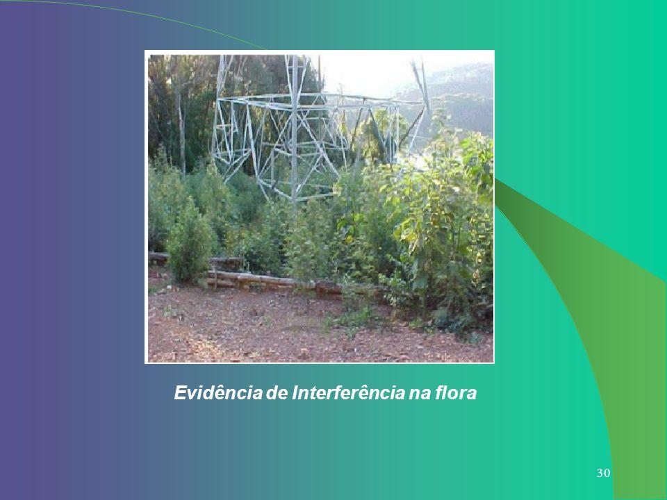 30 Evidência de Interferência na flora