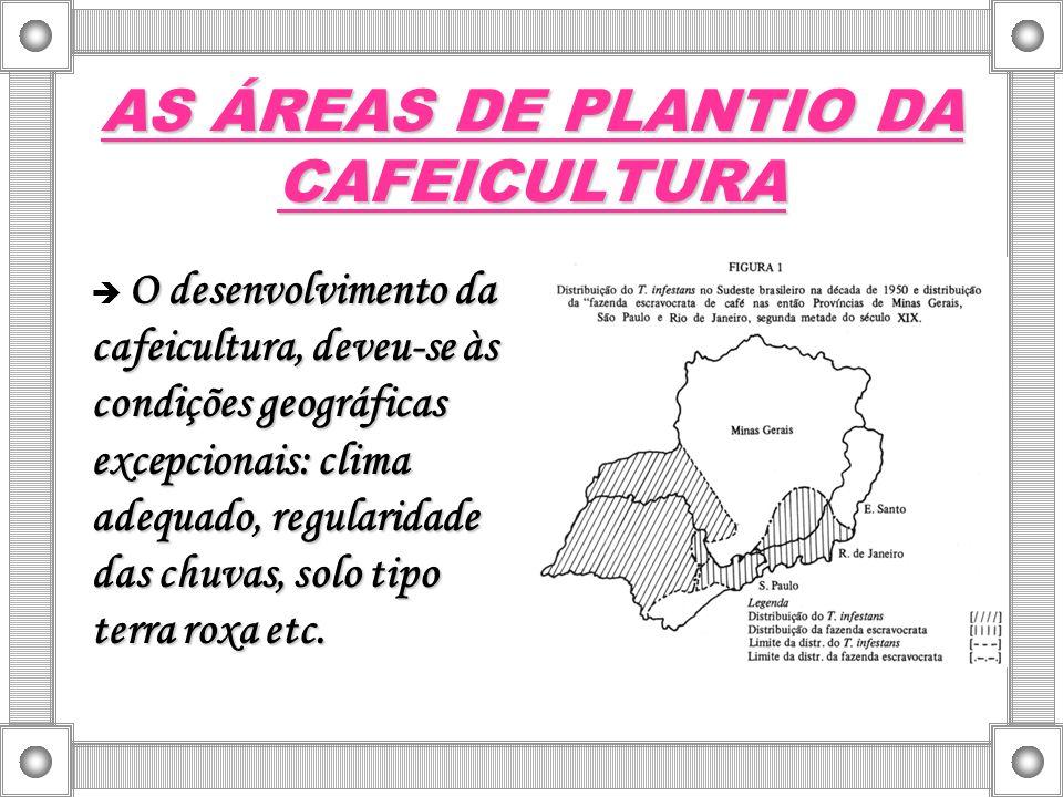 AS ÁREAS DE PLANTIO DA CAFEICULTURA O desenvolvimento da cafeicultura, deveu-se às condições geográficas excepcionais: clima adequado, regularidade da