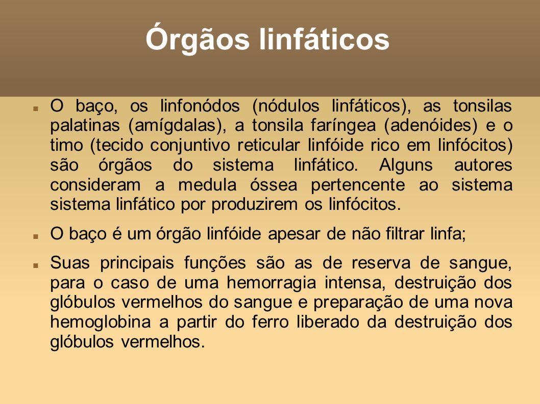 Órgãos linfáticos O baço, os linfonódos (nódulos linfáticos), as tonsilas palatinas (amígdalas), a tonsila faríngea (adenóides) e o timo (tecido conju