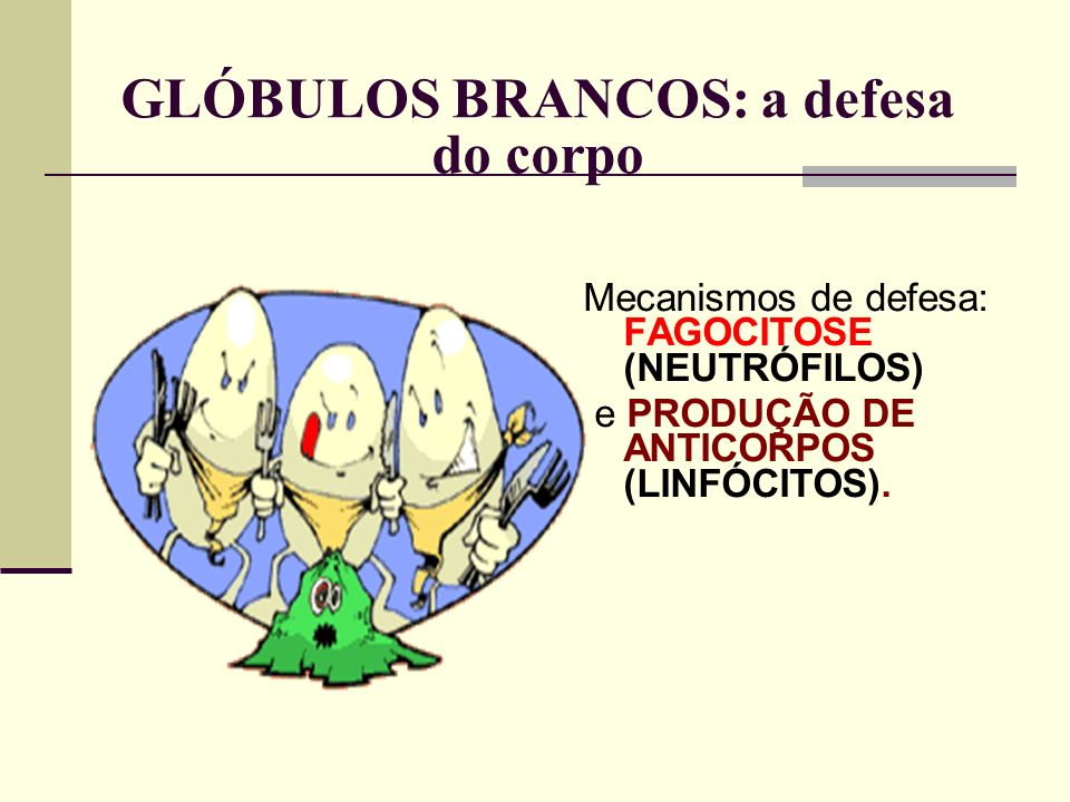 GLÓBULOS BRANCOS: a defesa do corpo Mecanismos de defesa: FAGOCITOSE (NEUTRÓFILOS) e PRODUÇÃO DE ANTICORPOS (LINFÓCITOS).
