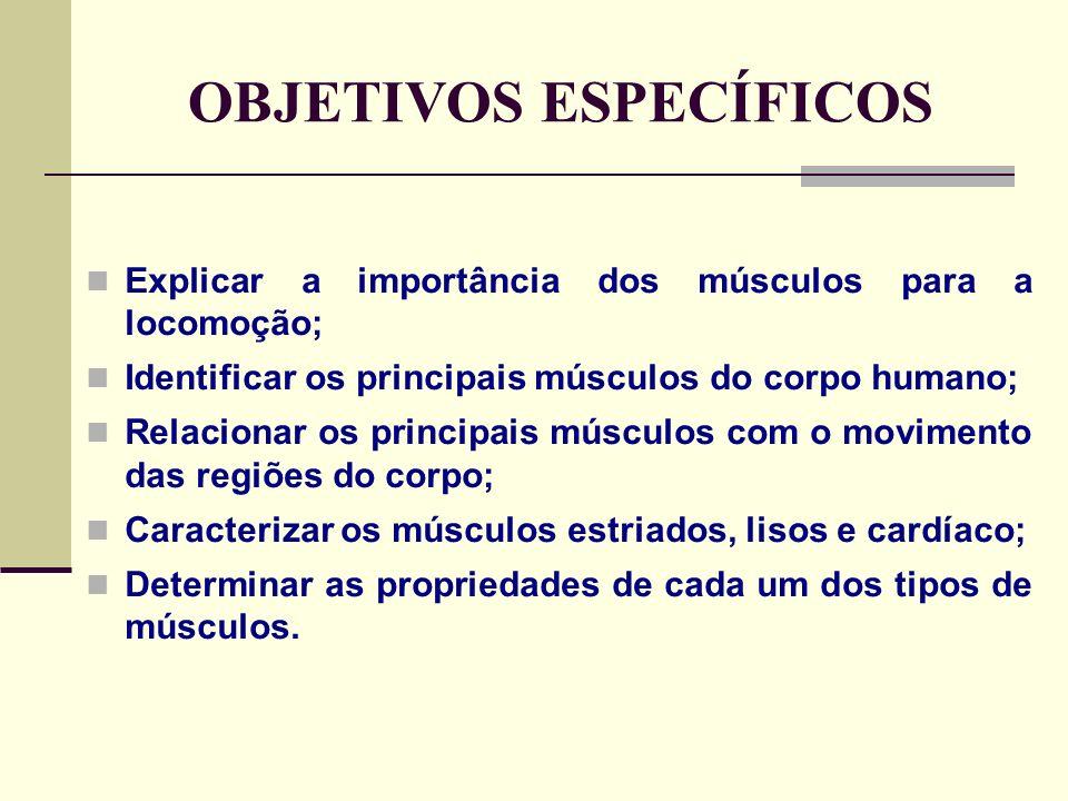 OBJETIVOS ESPECÍFICOS Explicar a importância dos músculos para a locomoção; Identificar os principais músculos do corpo humano; Relacionar os principais músculos com o movimento das regiões do corpo; Caracterizar os músculos estriados, lisos e cardíaco; Determinar as propriedades de cada um dos tipos de músculos.