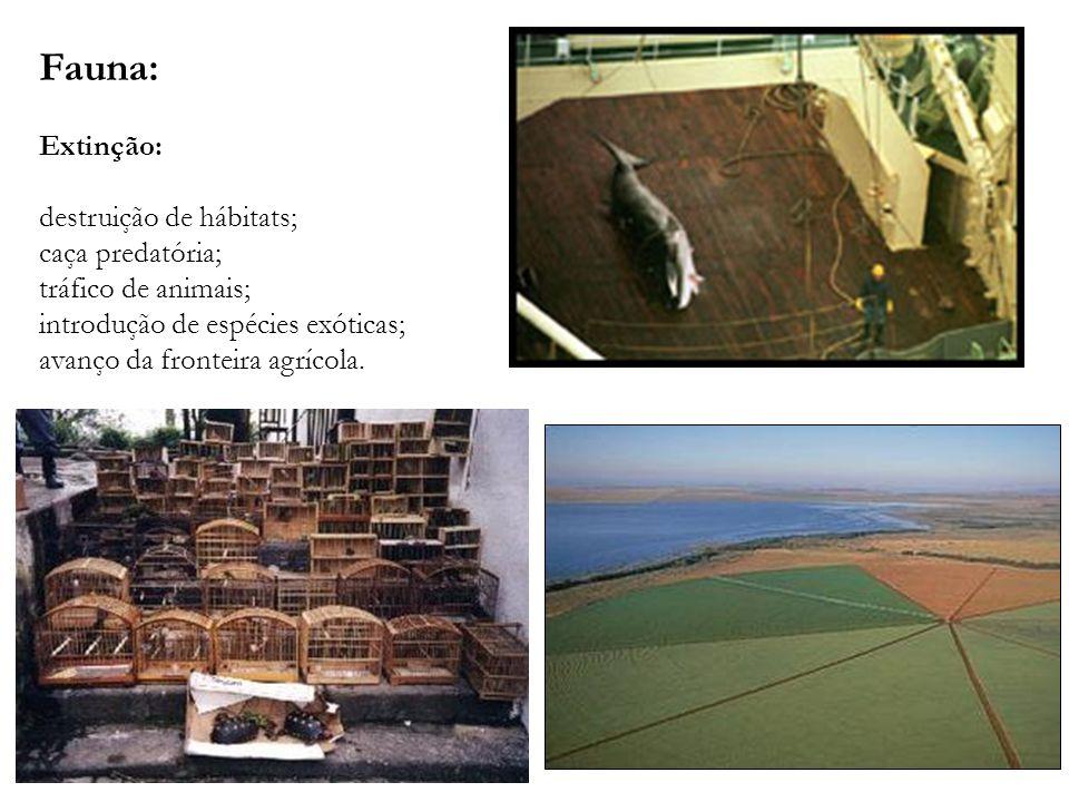 Fauna: Extinção: destruição de hábitats; caça predatória; tráfico de animais; introdução de espécies exóticas; avanço da fronteira agrícola.