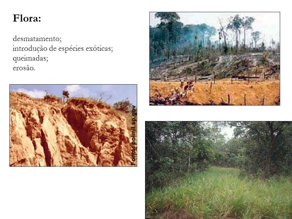 Flora: desmatamento; introdução de espécies exóticas; queimadas; erosão.