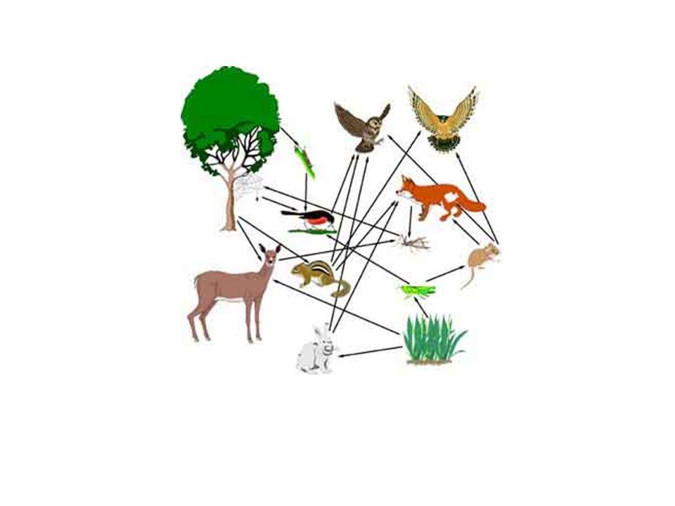 Novo código florestal: