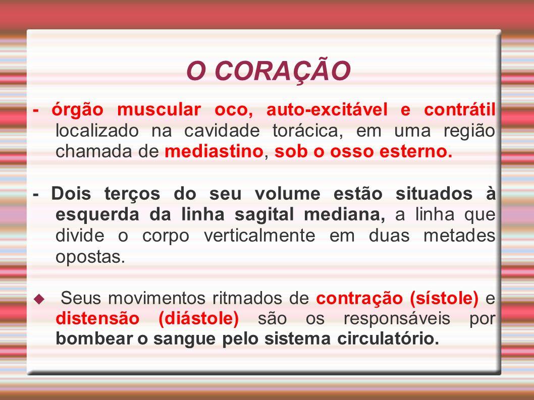 O CORAÇÃO - órgão muscular oco, auto-excitável e contrátil localizado na cavidade torácica, em uma região chamada de mediastino, sob o osso esterno. -