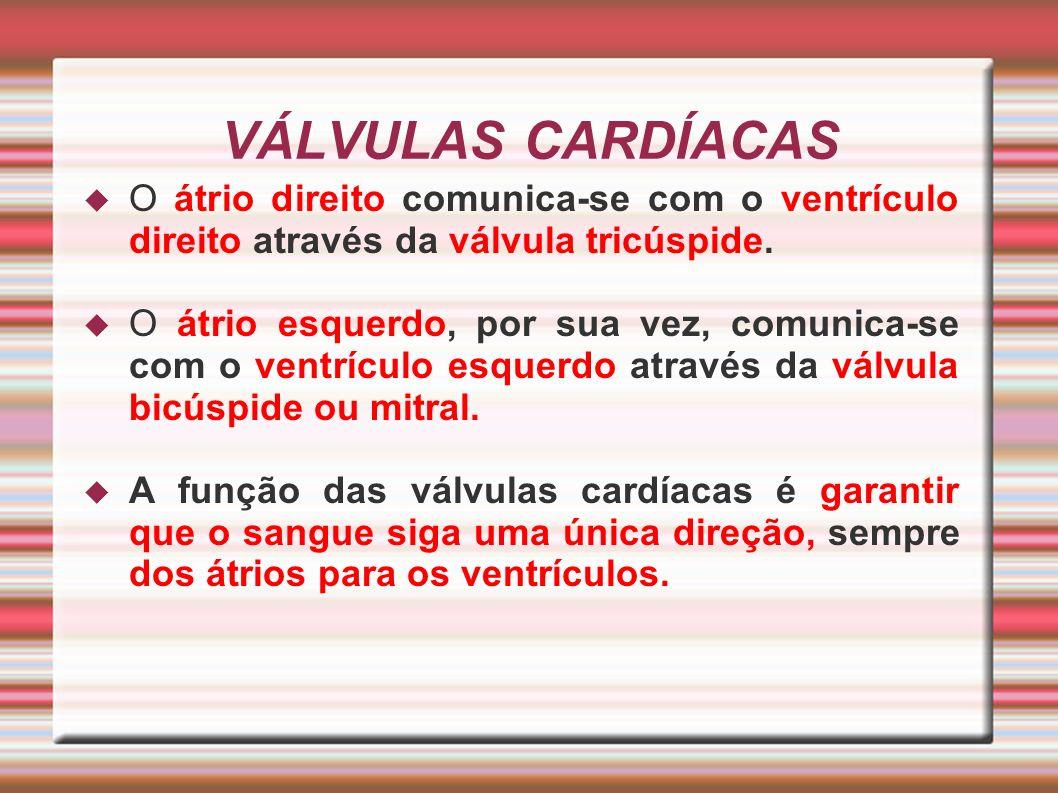 VÁLVULAS CARDÍACAS O átrio direito comunica-se com o ventrículo direito através da válvula tricúspide. O átrio esquerdo, por sua vez, comunica-se com