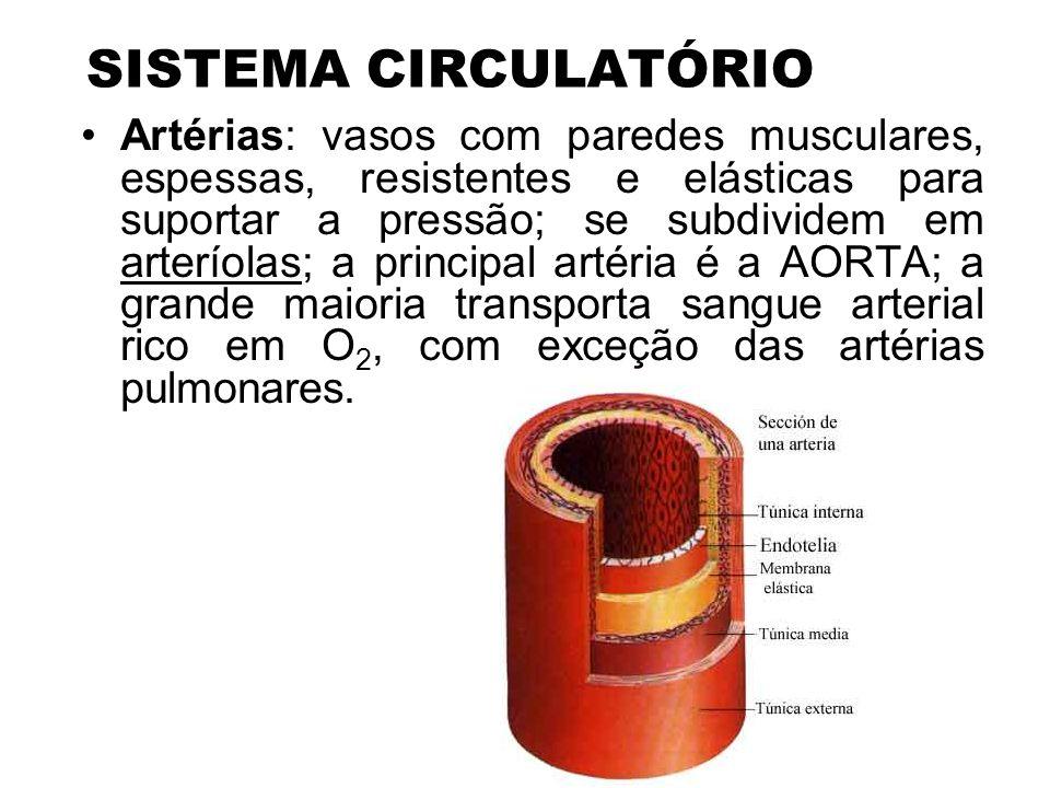SISTEMA CIRCULATÓRIO Veias: vasos de menor calibre, paredes menos espessas; a maioria transporta sangue venoso, não oxigenado, com exceção das veias pulmonares; veias cavas superior e inferior são as mais espessas do corpo