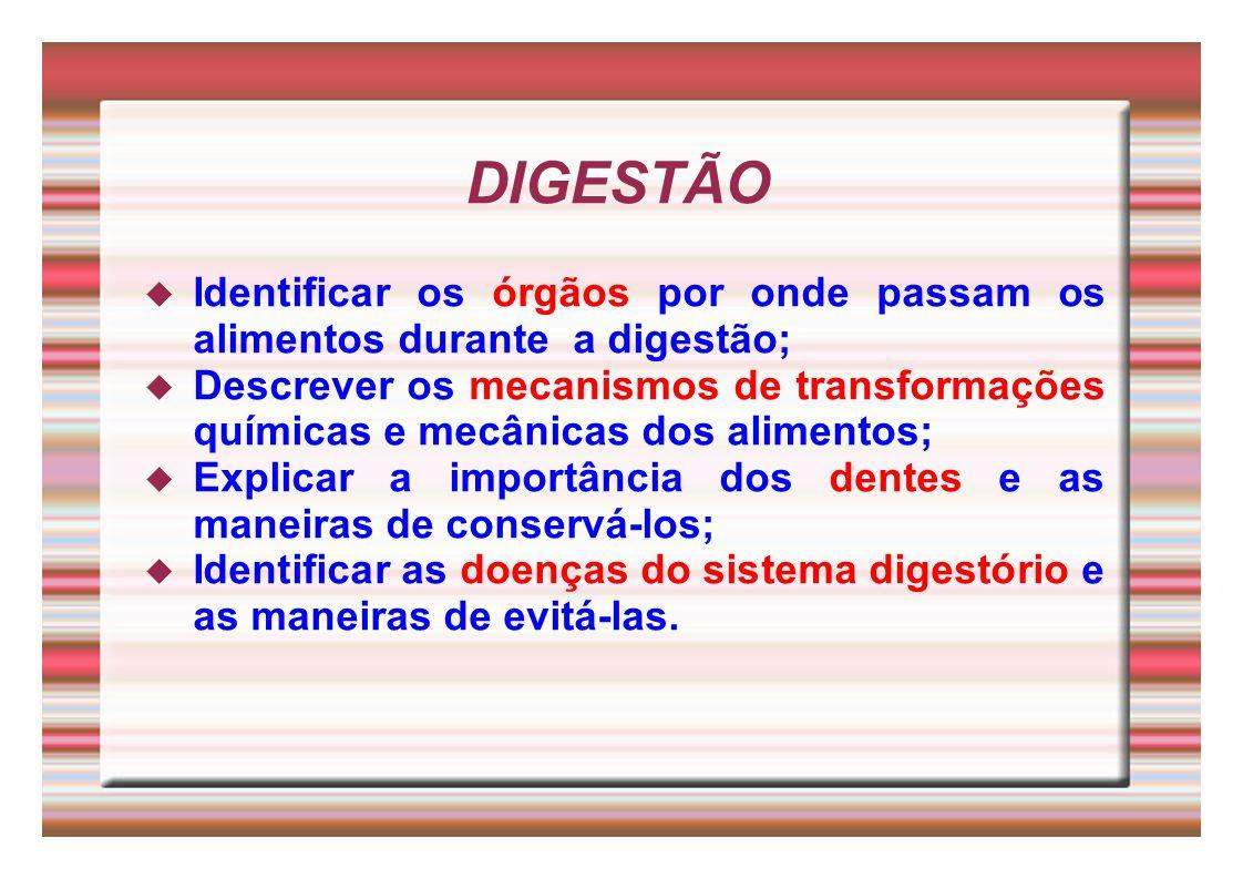 DIGESTÃO Identificar os órgãos por onde passam os alimentos durante a digestão; Descrever os mecanismos de transformações químicas e mecânicas dos ali