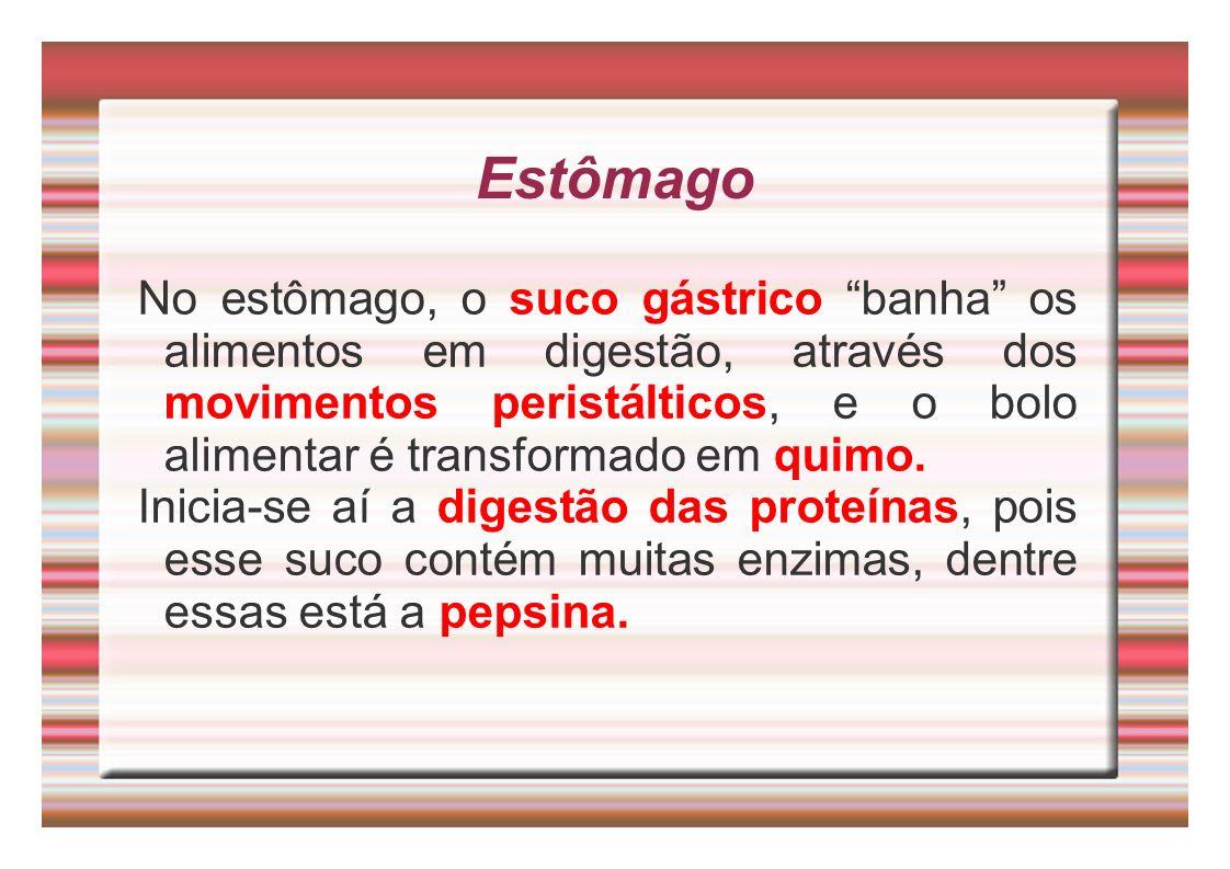 Estômago No estômago, o suco gástrico banha os alimentos em digestão, através dos movimentos peristálticos, e o bolo alimentar é transformado em quimo
