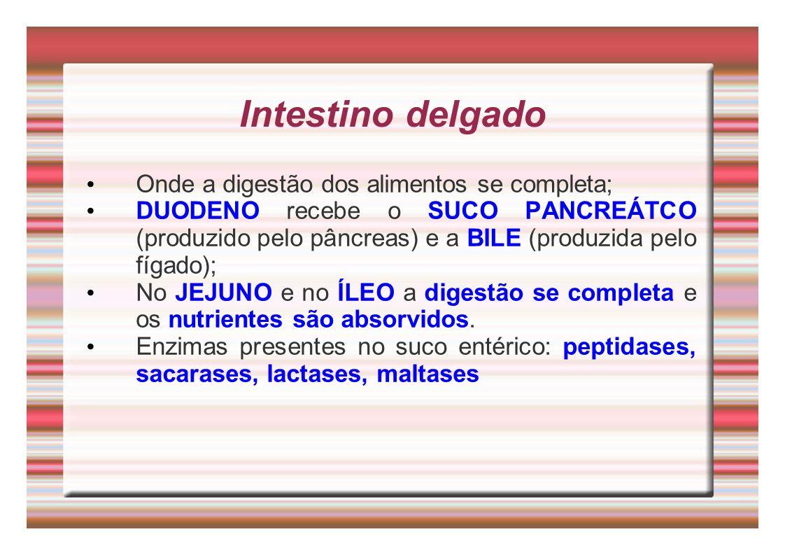 Intestino delgado Onde a digestão dos alimentos se completa; DUODENO recebe o SUCO PANCREÁTCO (produzido pelo pâncreas) e a BILE (produzida pelo fígad