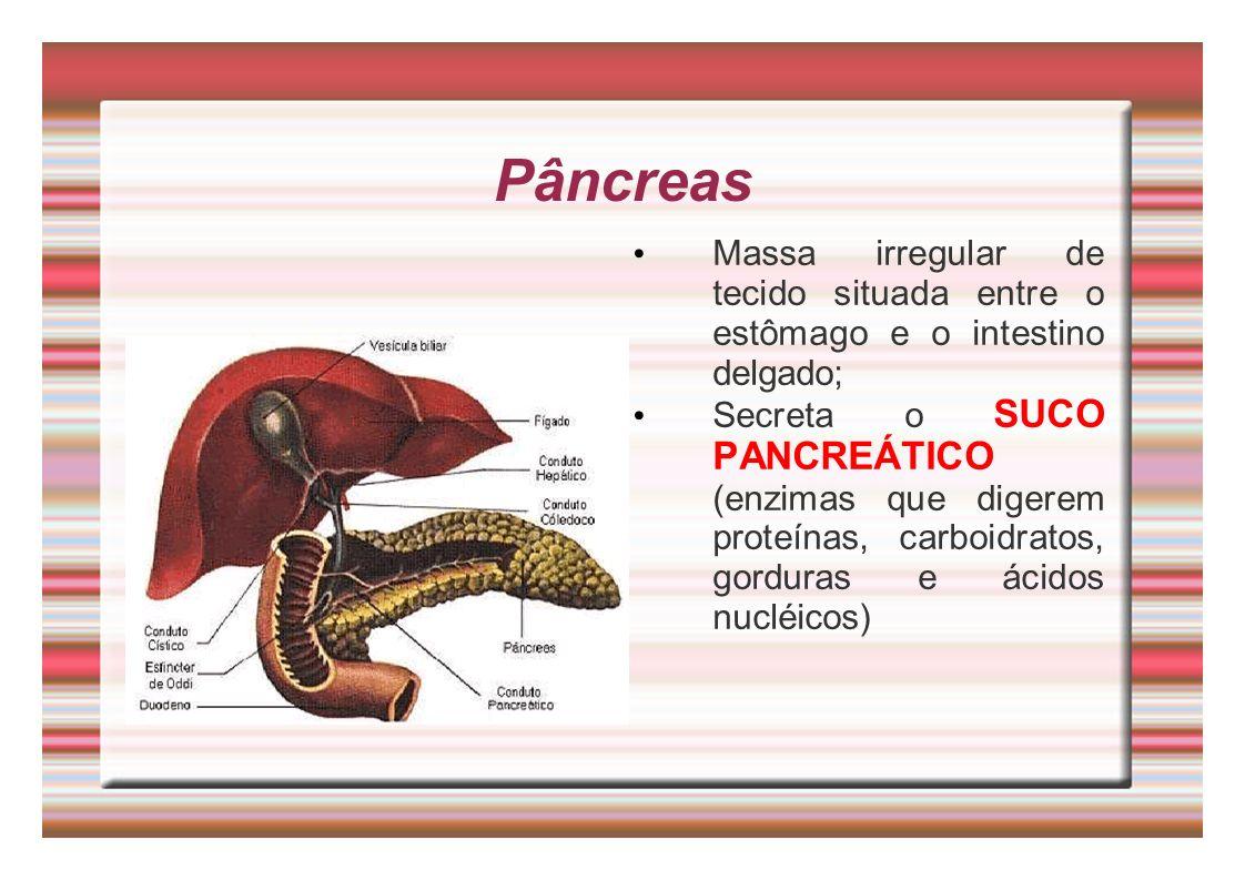 Pâncreas Massa irregular de tecido situada entre o estômago e o intestino delgado; Secreta o SUCO PANCREÁTICO (enzimas que digerem proteínas, carboidr