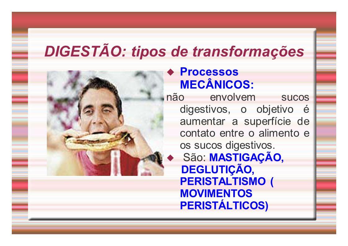 DIGESTÃO: tipos de transformações Processos MECÂNICOS: não envolvem sucos digestivos, o objetivo é aumentar a superfície de contato entre o alimento e