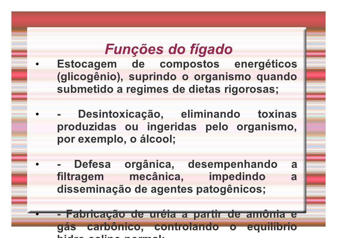 Funções do fígado Estocagem de compostos energéticos (glicogênio), suprindo o organismo quando submetido a regimes de dietas rigorosas; - Desintoxicaç