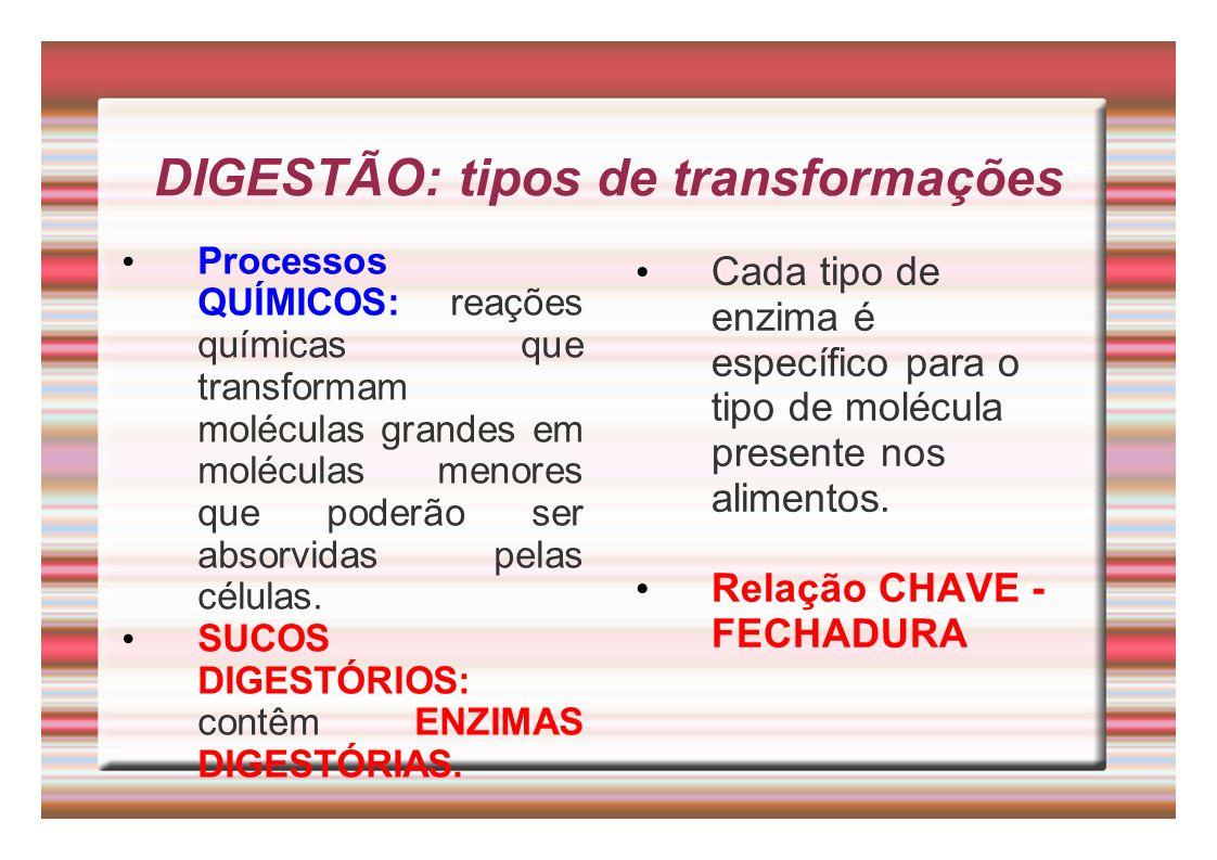 DIGESTÃO: tipos de transformações Processos QUÍMICOS: reações químicas que transformam moléculas grandes em moléculas menores que poderão ser absorvid