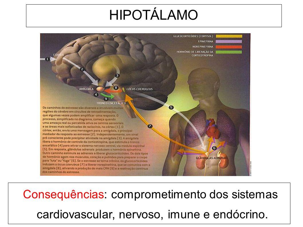 HIPOTÁLAMO Consequências: comprometimento dos sistemas cardiovascular, nervoso, imune e endócrino.
