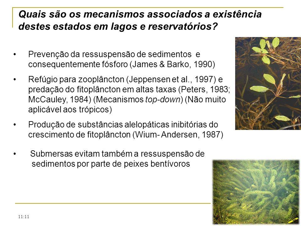 11:11 Prevenção da ressuspensão de sedimentos e consequentemente fósforo (James & Barko, 1990) Refúgio para zooplâncton (Jeppensen et al., 1997) e pre