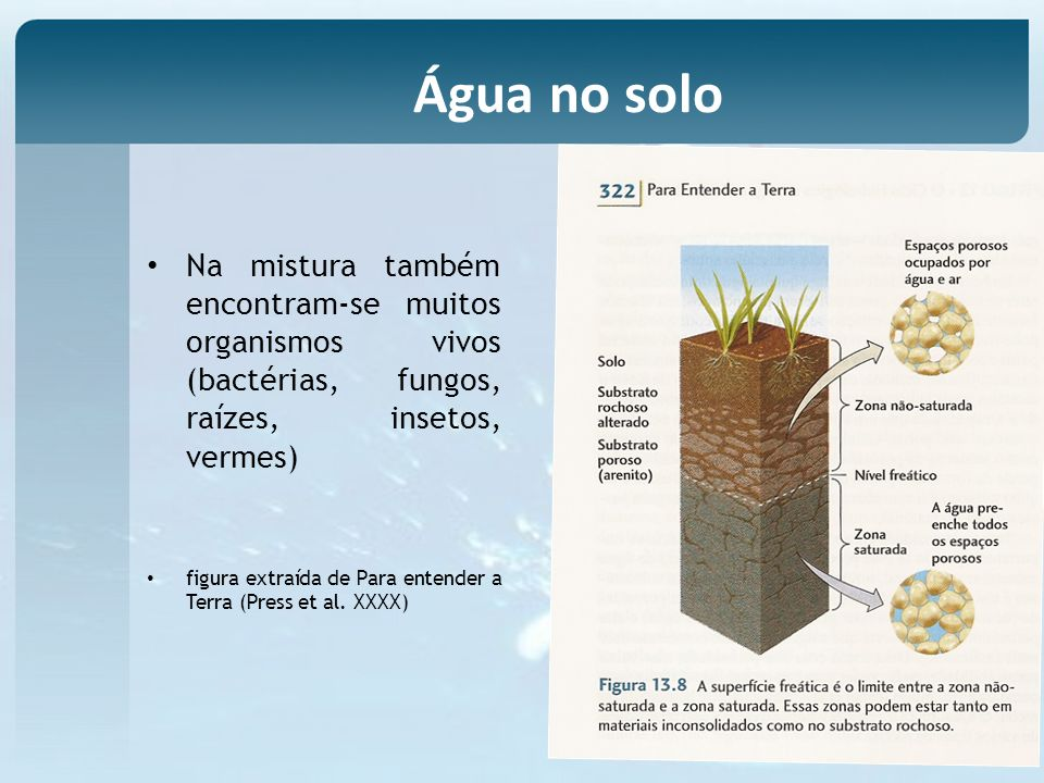 Na mistura também encontram-se muitos organismos vivos (bactérias, fungos, raízes, insetos, vermes) figura extraída de Para entender a Terra (Press et