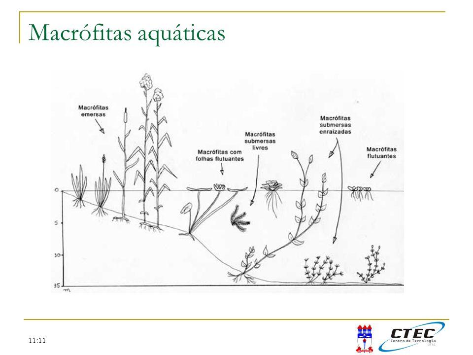 11:11 Formulação da produção primária Um simples balanço de massa pode representar a dinâmica de crescimento de algas: onde a é a concentração de algas (mg cl-a/m 3 ) e k g é a taxa de crescimento de primeira ordem (d -1 )
