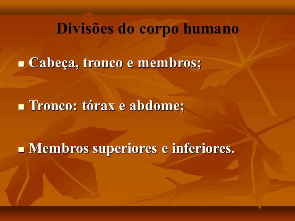 Divisões do corpo humano Cabeça, tronco e membros; Cabeça, tronco e membros; Tronco: tórax e abdome; Tronco: tórax e abdome; Membros superiores e inferiores.