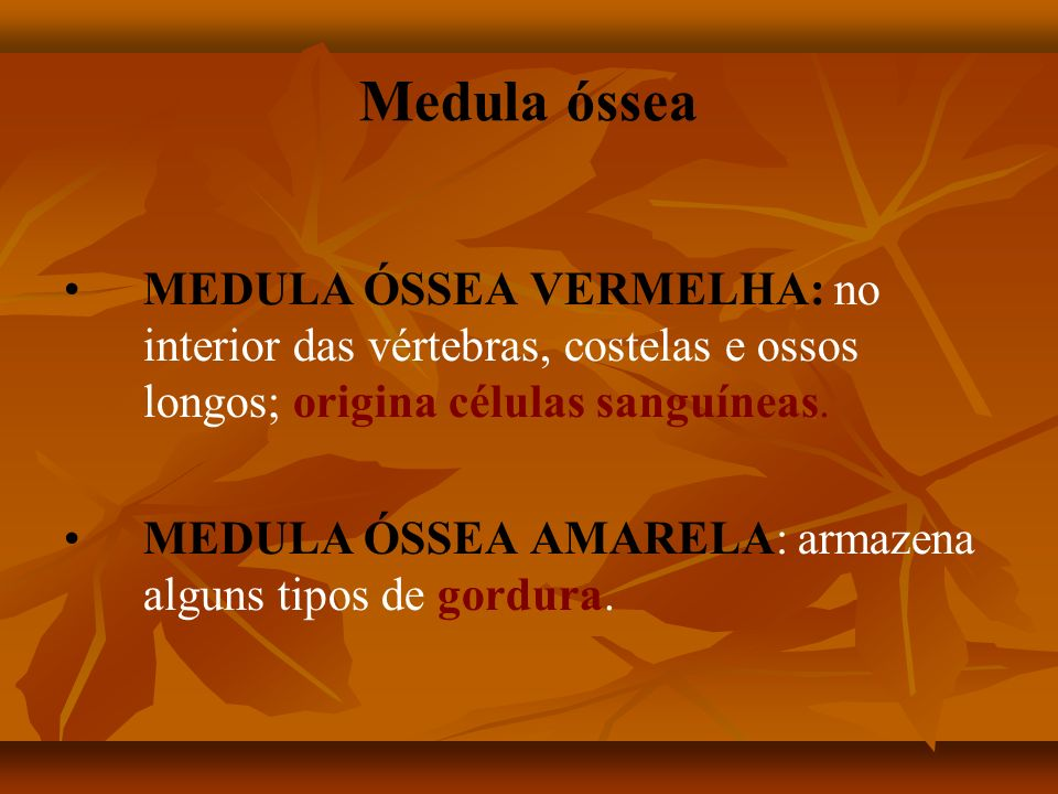Medula óssea MEDULA ÓSSEA VERMELHA: no interior das vértebras, costelas e ossos longos; origina células sanguíneas.