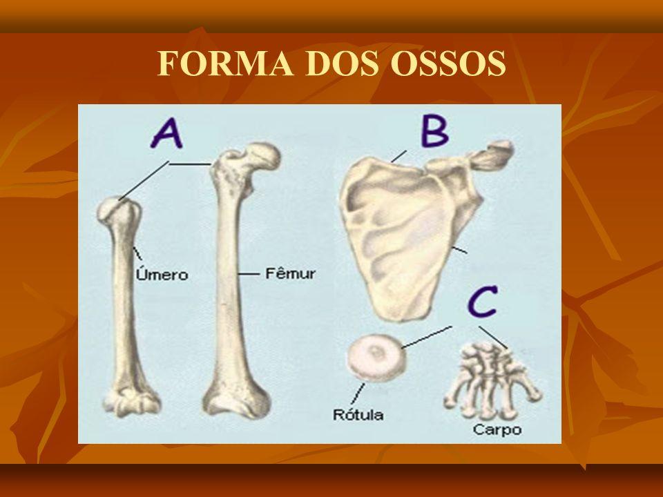 FORMA DOS OSSOS