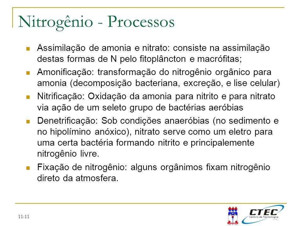 11:11 Nitrogênio - Processos Assimilação de amonia e nitrato: consiste na assimilação destas formas de N pelo fitoplâncton e macrófitas; Amonificação: