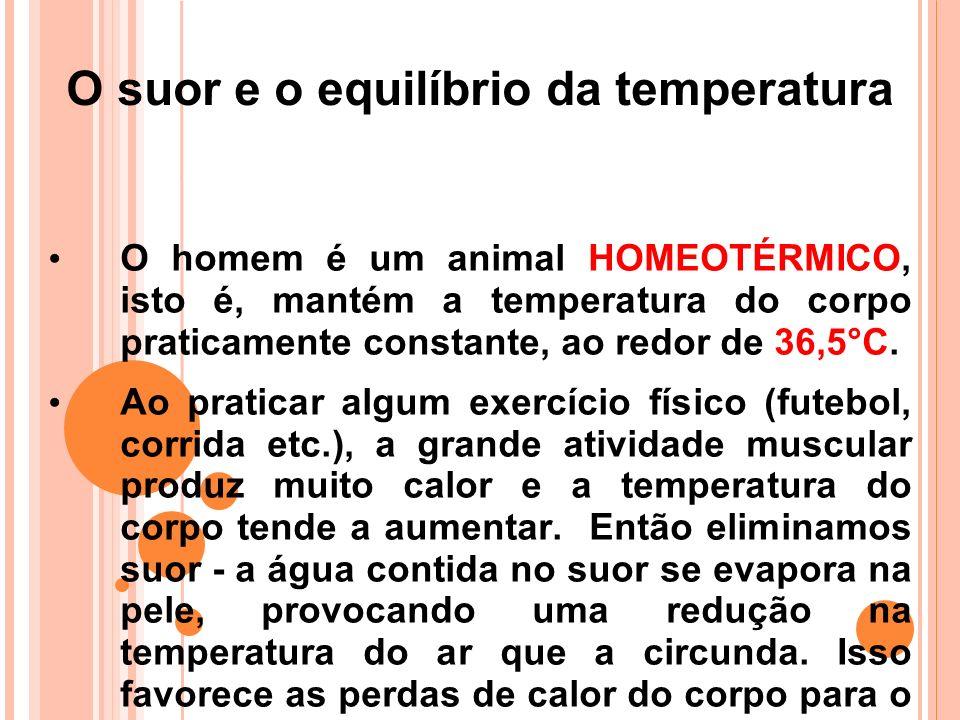 O suor e o equilíbrio da temperatura O homem é um animal HOMEOTÉRMICO, isto é, mantém a temperatura do corpo praticamente constante, ao redor de 36,5°C.