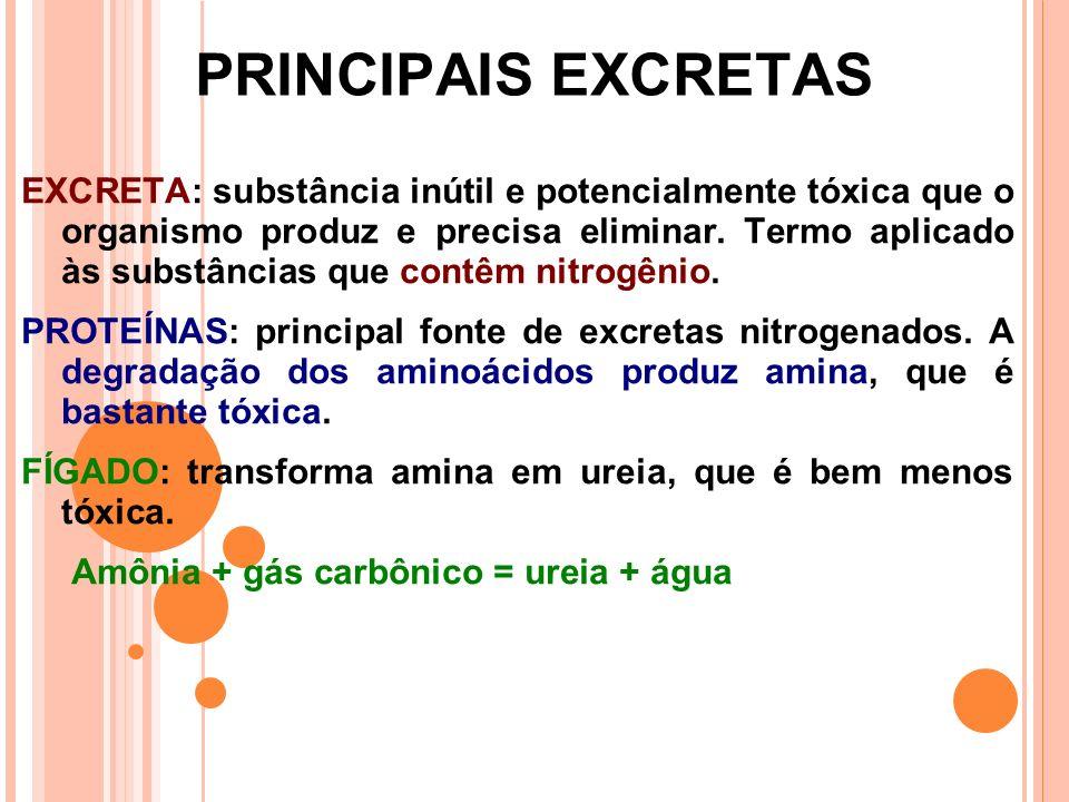 PRINCIPAIS EXCRETAS EXCRETA: substância inútil e potencialmente tóxica que o organismo produz e precisa eliminar.