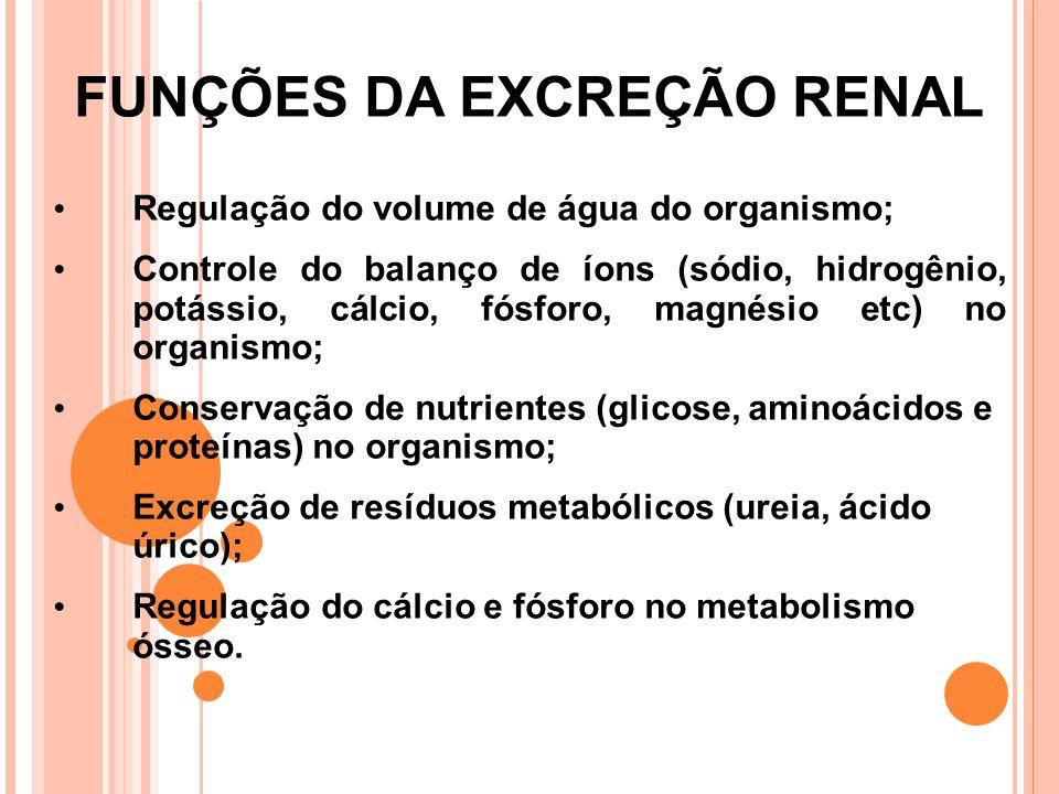 FUNÇÕES DA EXCREÇÃO RENAL Regulação do volume de água do organismo; Controle do balanço de íons (sódio, hidrogênio, potássio, cálcio, fósforo, magnésio etc) no organismo; Conservação de nutrientes (glicose, aminoácidos e proteínas) no organismo; Excreção de resíduos metabólicos (ureia, ácido úrico); Regulação do cálcio e fósforo no metabolismo ósseo.