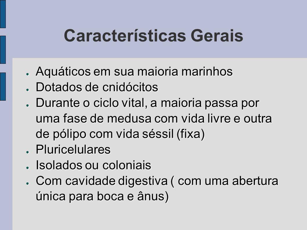Características Gerais Aquáticos em sua maioria marinhos Aquáticos em sua maioria marinhos Dotados de cnidócitos Dotados de cnidócitos Durante o ciclo