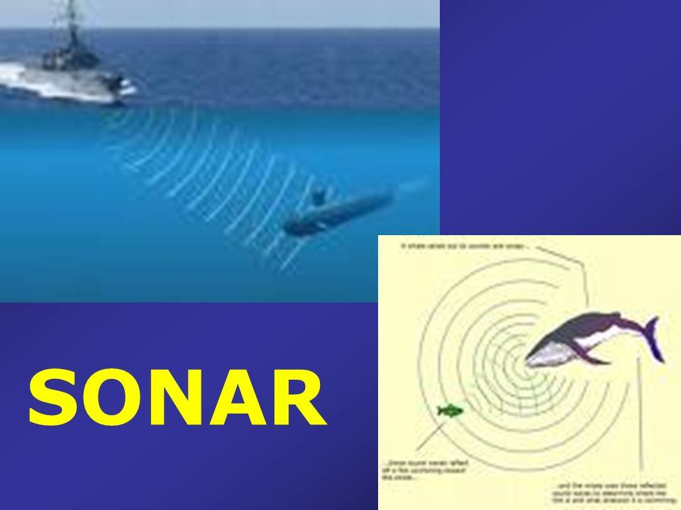 O eco é de fundamental importância também para os golfinhos. Os golfinhos utilizam o princípio do eco na água para capturarem seu alimento.