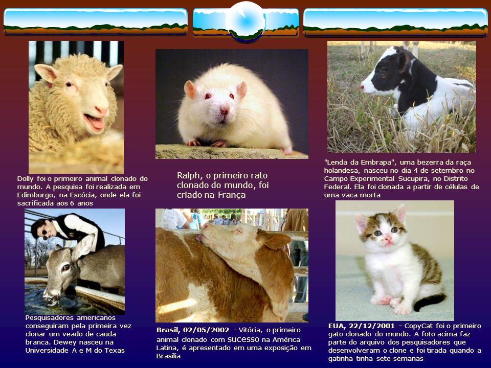 Pesquisadores americanos conseguiram pela primeira vez clonar um veado de cauda branca. Dewey nasceu na Universidade A e M do Texas Ralph, o primeiro