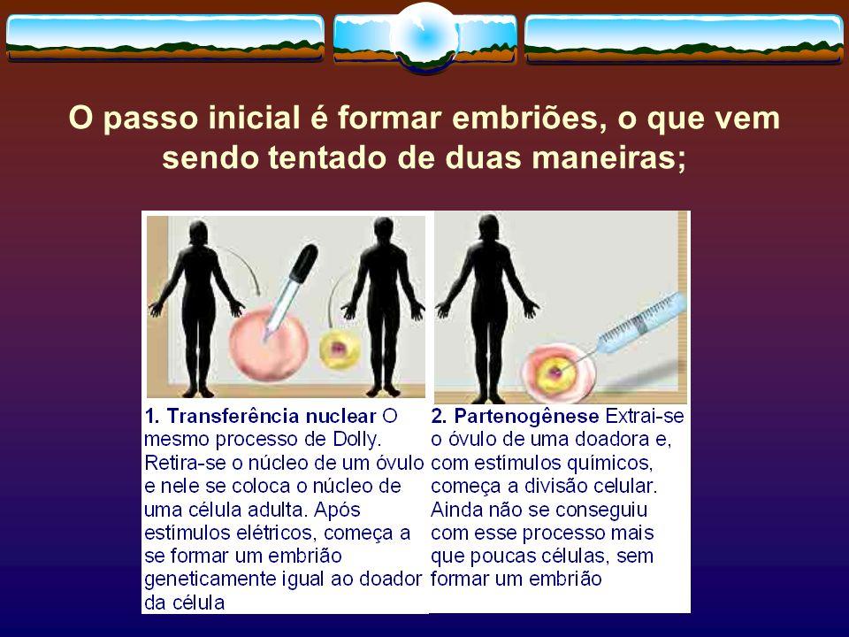 O passo inicial é formar embriões, o que vem sendo tentado de duas maneiras;