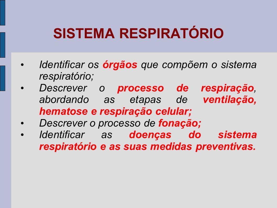 RESPIRAÇÃO Respiração celular: utilização da energia química dos alimentos; ocorre nas mitocôndrias.