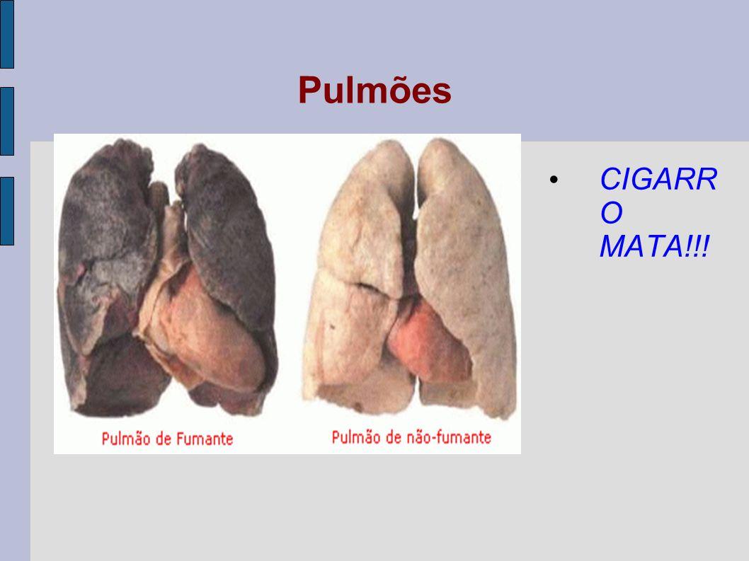 Alvéolos pulmonares Cada bronquíolo termina em pequenas bolsas formadas por células epiteliais achatadas (tecido epitelial pavimentoso) recobertas por capilares sangüíneos, denominadas alvéolos pulmonares.