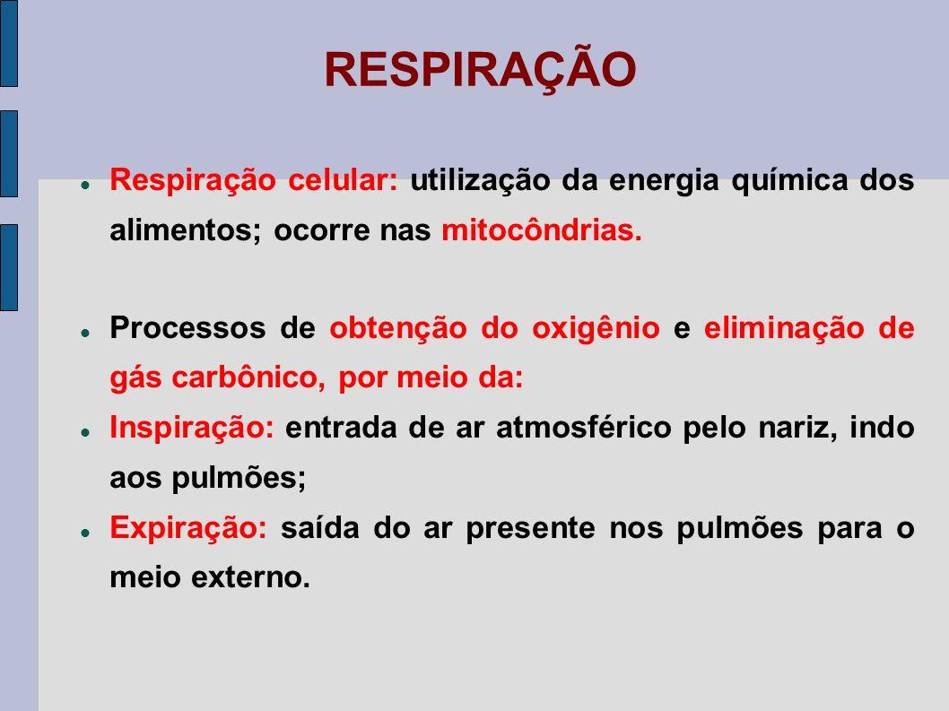 SISTEMA RESPIRATÓRIO Nariz, Faringe, Laringe, Traqueia, Brônquios, Pulmões, Diafragma, Músculos inter- costais.