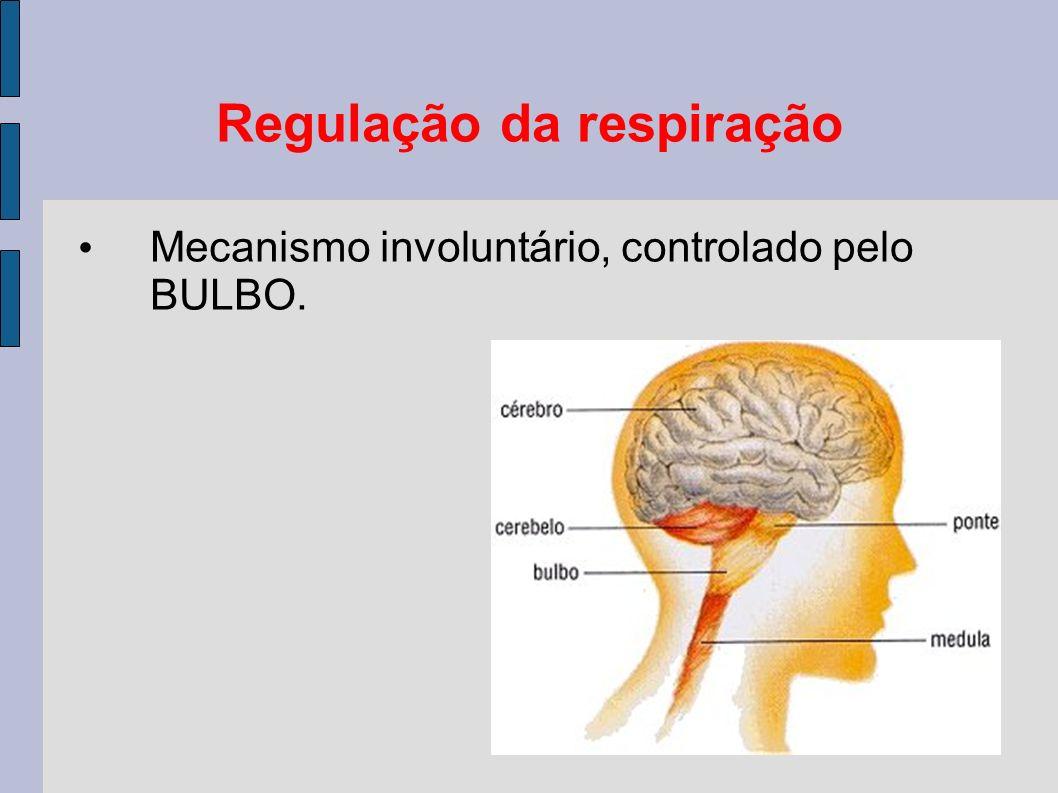 Regulação da respiração Mecanismo involuntário, controlado pelo BULBO.