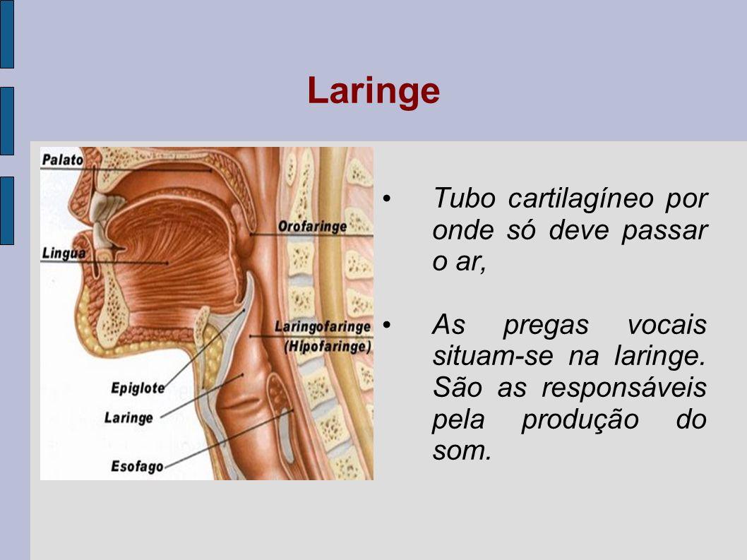 Fonação Produção do som: O ar inspirado passa pelas pregas vocais em posição aberta, enchendo os pulmões.