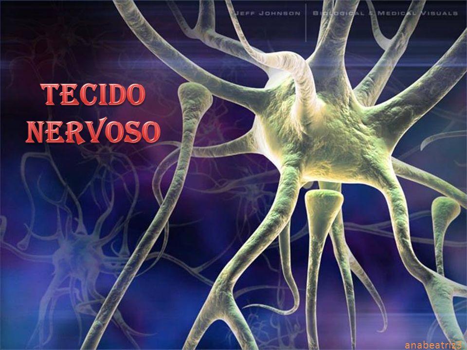 TECIDO NERVOSO anabeatriz3