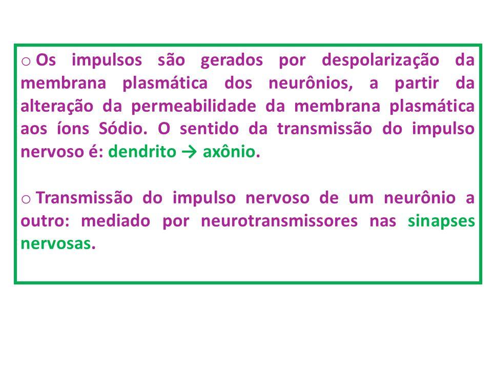 o Os impulsos são gerados por despolarização da membrana plasmática dos neurônios, a partir da alteração da permeabilidade da membrana plasmática aos