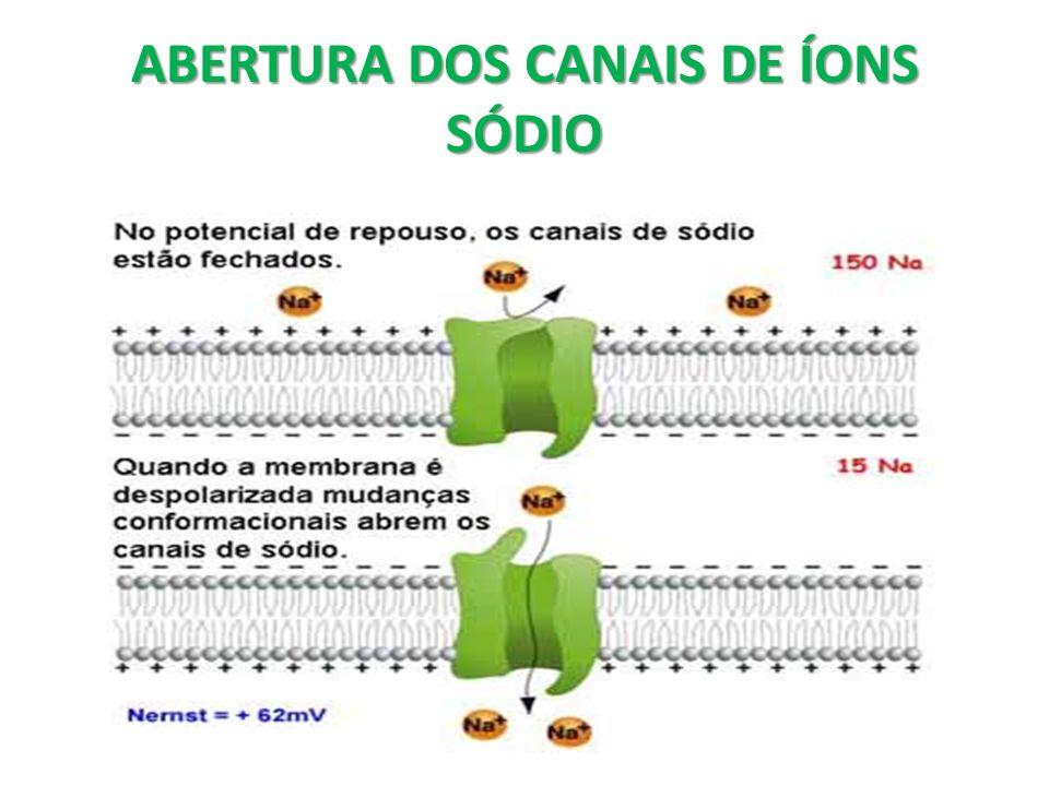 ABERTURA DOS CANAIS DE ÍONS SÓDIO