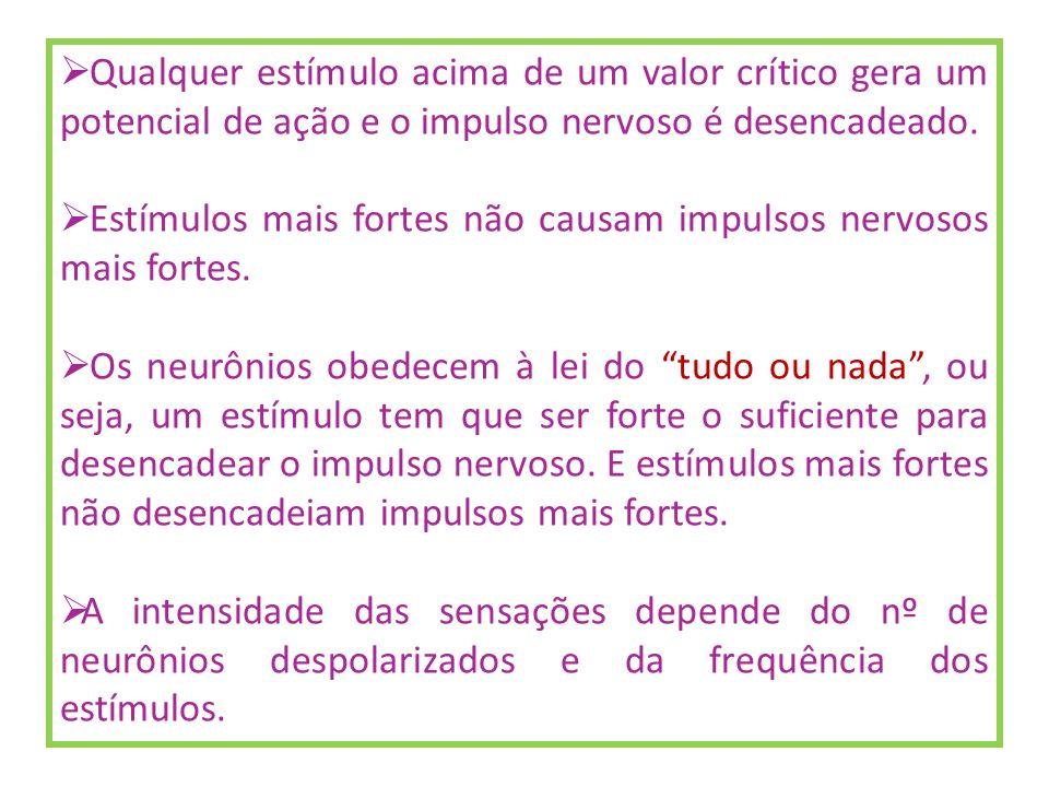 Qualquer estímulo acima de um valor crítico gera um potencial de ação e o impulso nervoso é desencadeado. Estímulos mais fortes não causam impulsos ne
