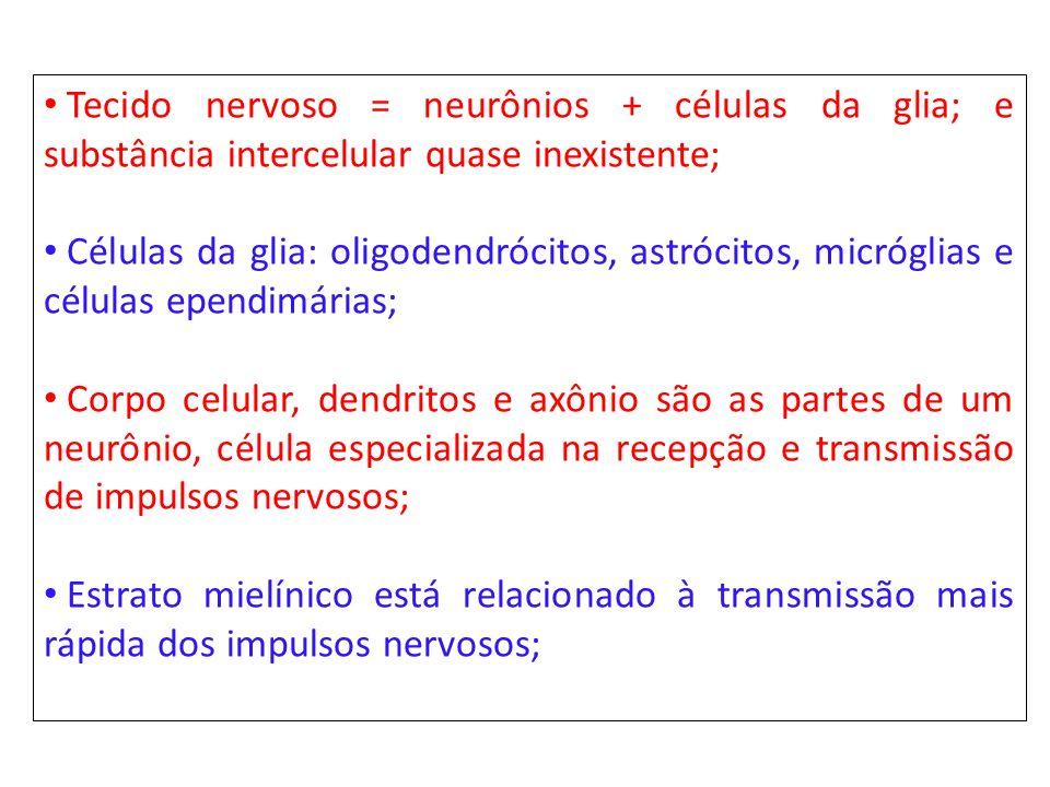Tecido nervoso = neurônios + células da glia; e substância intercelular quase inexistente; Células da glia: oligodendrócitos, astrócitos, micróglias e