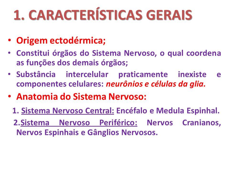 1. CARACTERÍSTICAS GERAIS Origem ectodérmica; Constitui órgãos do Sistema Nervoso, o qual coordena as funções dos demais órgãos; Substância intercelul