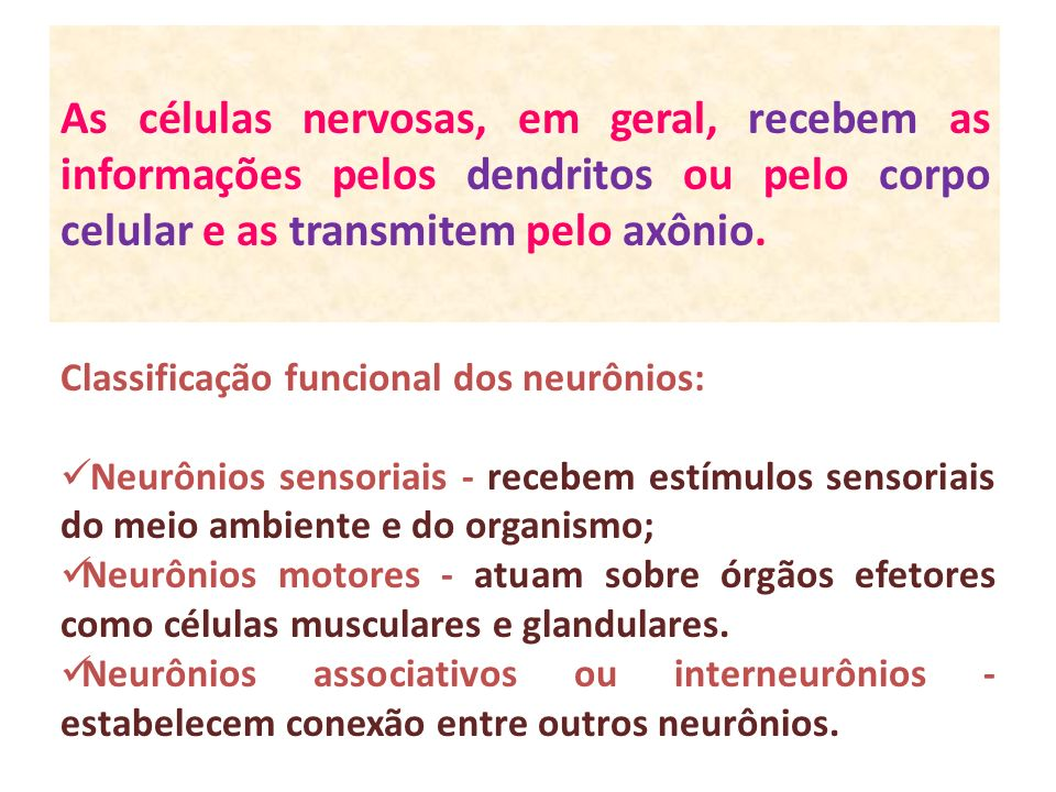 As células nervosas, em geral, recebem as informações pelos dendritos ou pelo corpo celular e as transmitem pelo axônio. Classificação funcional dos n